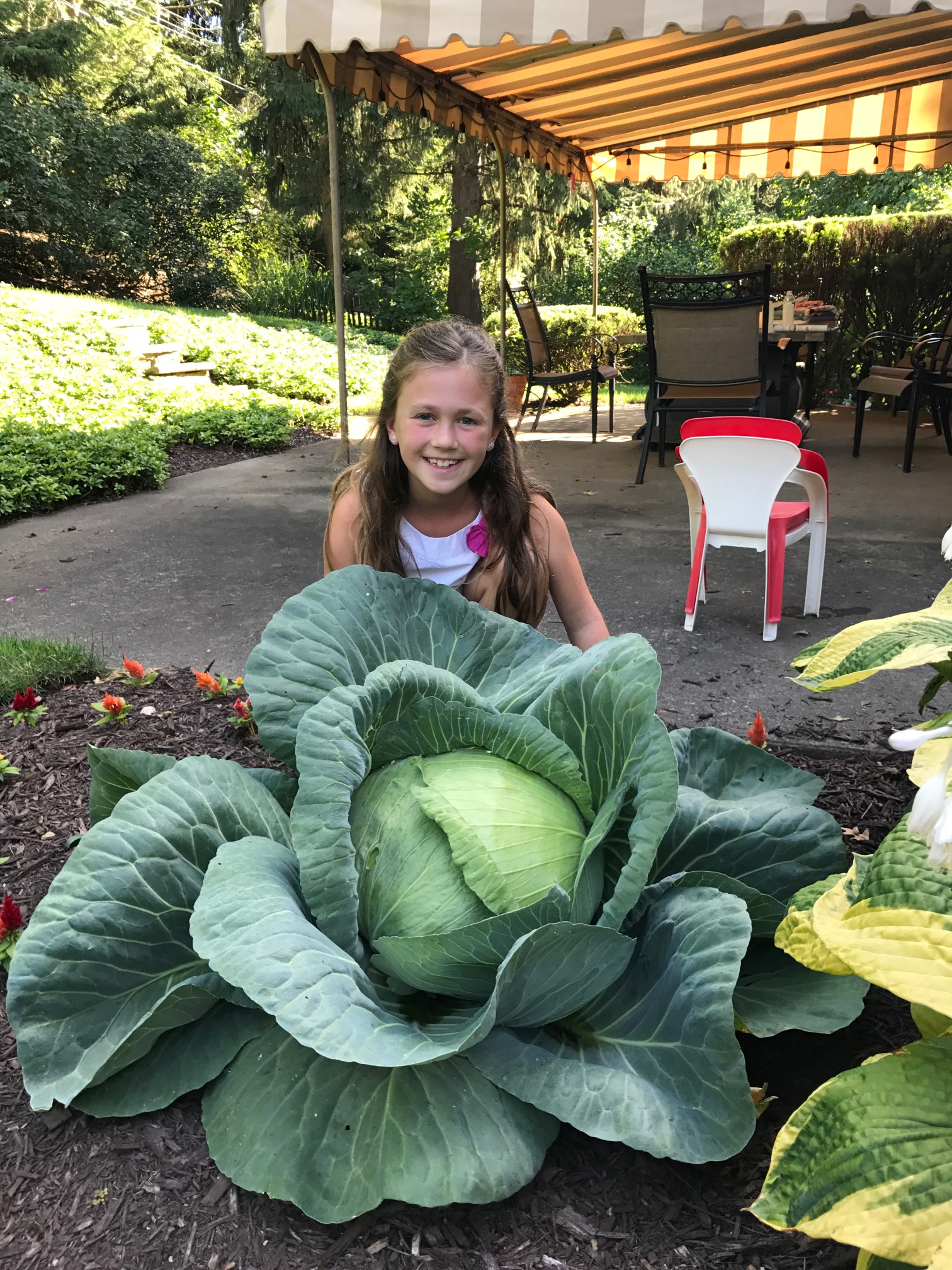 Bonnie Plant Cabbage Contest Winner